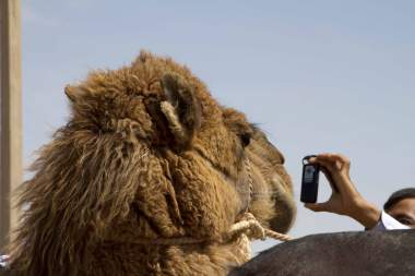Camel photo shoot