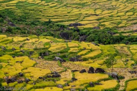Die Reisfelder in Toraja