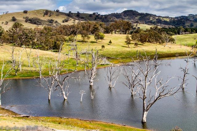 Dead trees in a water reservoir, Golden Highway